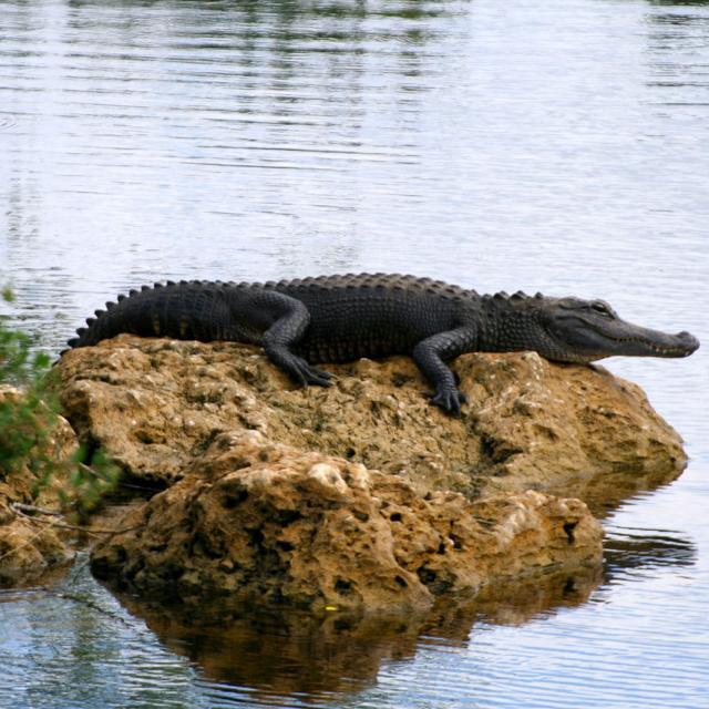 Insider: Everglades Tour & Stadtführung