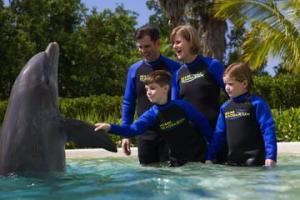 delfin-erlebnis-im-miami-seaquarium-in-miami-250933